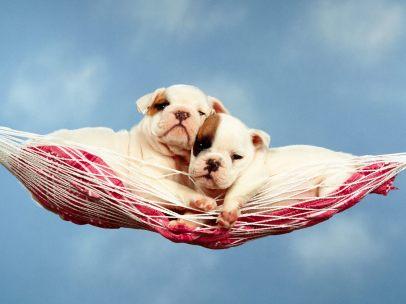 hammock-happiness